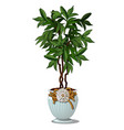 green bush with leaves in decorative white pot vector image