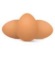 chicken eggs vector image