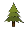 drawing pine tree forest camping icon vector image vector image