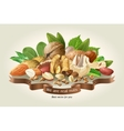 mix of different types nuts vector image vector image