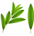Olive twig vector image