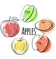 set of apples of different shapes single and vector image
