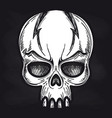 agressive monsters skull on blackboard vector image vector image