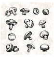 digital detailed mushrooms hand drawn vector image vector image