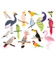 flat parrots and tropical jungle birds flying