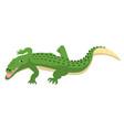 predatory alligator crocodile with open mouth vector image