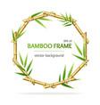 realistic 3d detailed bamboo shoots circle frame vector image vector image
