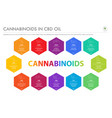 cannabinoids in cbd oil with structural formulas vector image vector image