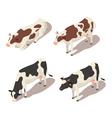 Isometric 3d set of cows vector image