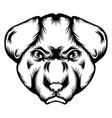 tattoo bulldog single head vector image