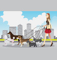 woman walking dogs vector image