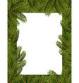 Frame spruce branch Tree frame for text White vector image