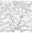 borago pattern vector image