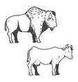 cow and buffalo icons isolated on white background vector image vector image