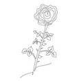flower rose hand-drawn in one line black vector image vector image