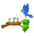 Mother and babies bird on the branch vector image vector image