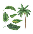 set tropical palm tree and exotic leaves vector image