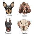 Drawing dog icons vector image