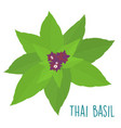 essential ingredient fresh thai basil leaf vector image vector image