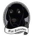Flat Retriever Portrait Isolated dog vector image vector image
