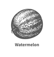 hand-drawn watermelon vector image vector image