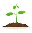 one growing green plant vector image vector image