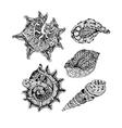set abstract shells vector image