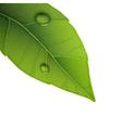 water droplets on leaf vector image vector image