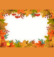 Autumn leaves rowan and flowers Template frame vector image