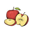 color engraved of apples hatched vector image