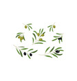 olive branches with leaves and olives set vector image