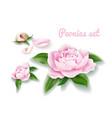 peony flower set buds blossom leaf petal vector image vector image