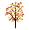 Autumn Rowan Tree vector image