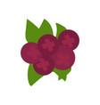 cranberries isolated purple berries image flat vector image vector image