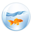 Ball With GoldFish In Water vector image