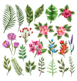 collection flowers and leaves vector image