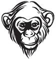 hand drawn portrait monkey chimpanzee black and vector image