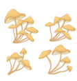 different mushrooms chanterelles vector image vector image