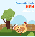 domestic bird hen vector image