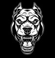 ferocious pit bull head vector image vector image