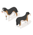 Isometric 3d of sheep dog vector image