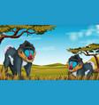 mandrill in nature scene vector image