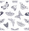 pattern with hand drawn butterflies and moths vector image vector image
