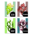 realistic sea weeds posters set vector image