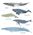 set 5 detailed whales from world realistic vector image