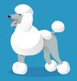 standart poodle white cartoon dog vector image vector image