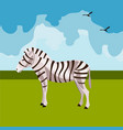 zebra icon african animals vector image vector image