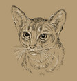 abyssinian cat on brown background vector image