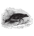 common american carolina rail vintage vector image vector image