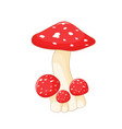 different mushrooms amanita of vector image vector image